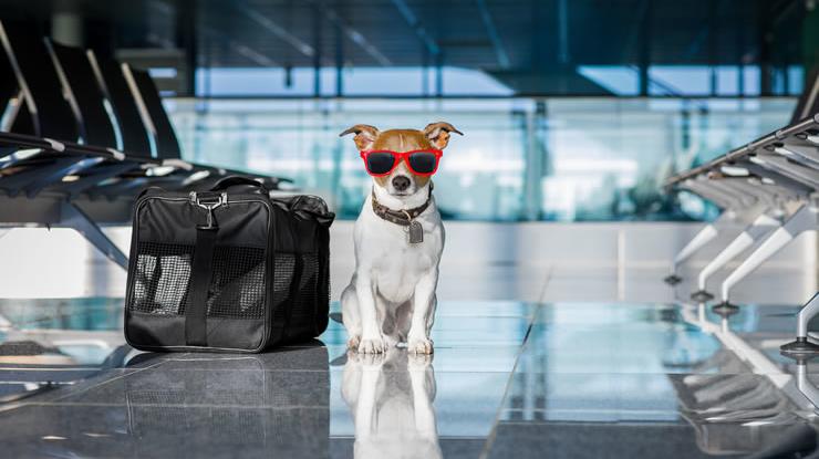 Como viajar de avião com seu Pet